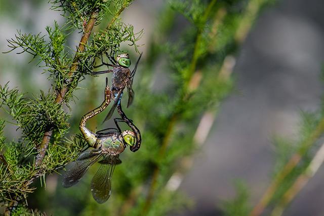 Vážky z nejkratší vzdálenosti