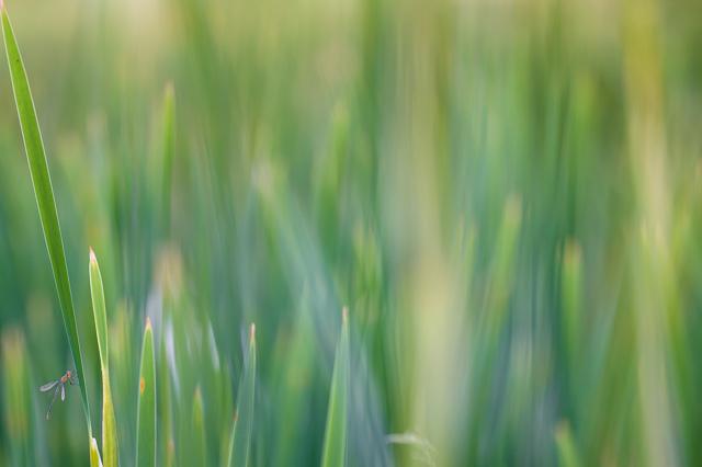 Vážky na 10 fotografických způsobů