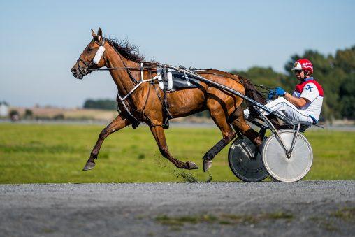 ME jezdců klusáckých koní Bravantice 2020