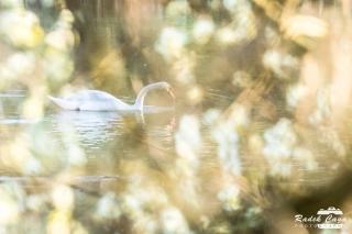 zivocichove labut (10)