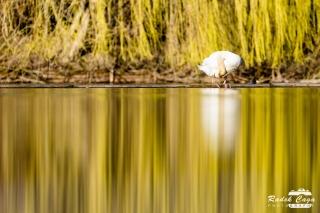 zivocichove labut (9)